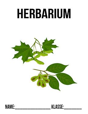 Deckblatt Herbarium Ahorn